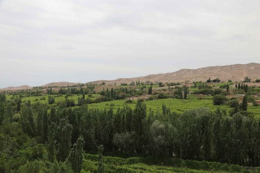 Turpan Grape Valley