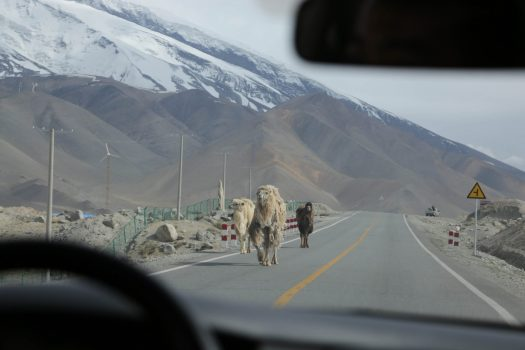 On the Karakoram Highway, camels share the road with other vehicles