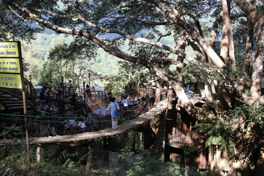 The cafe on a tree, at the Giant Chiang Mai