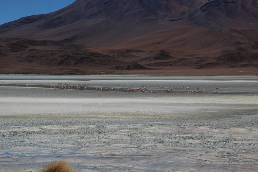 Flamingoes on a high altitude lake in Bolivia