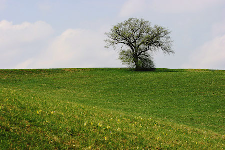 single-tree-1366780