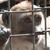 Environ 150 singes vont être euthanasiés au parc animalier La Pinède des singes. © Fondation 30 Millions d'Amis
