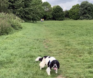 The Keto Diet – Week 8 Dog walking