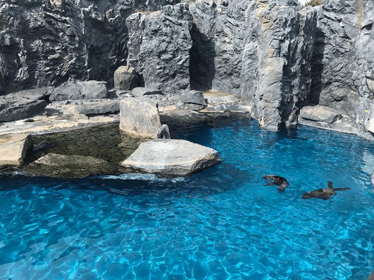Sea Lions at Mystic Aquarium