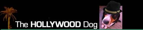 TheHOLLYWOODdog