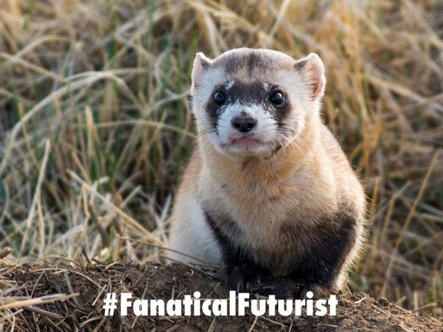 Futurist_ferret
