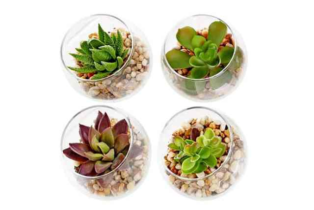 How to Grow an Easy Succulent Garden