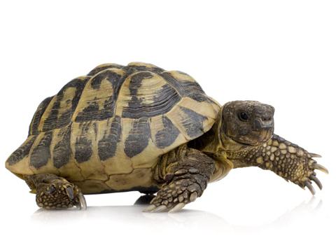 夢見烏龜和魚是什麼意思 做夢夢到烏龜和魚好不好_關於解夢