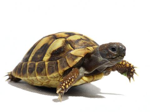 夢見烏龜在水裡游是什麼意思 做夢夢到烏龜在水裡游代表什麼_關於解夢