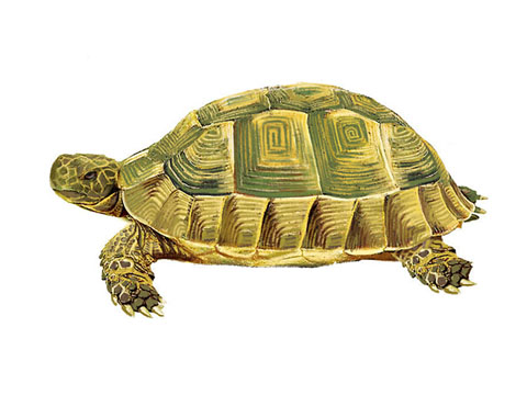 夢見烏龜是什麼意思 做夢夢到烏龜好不好_關於解夢