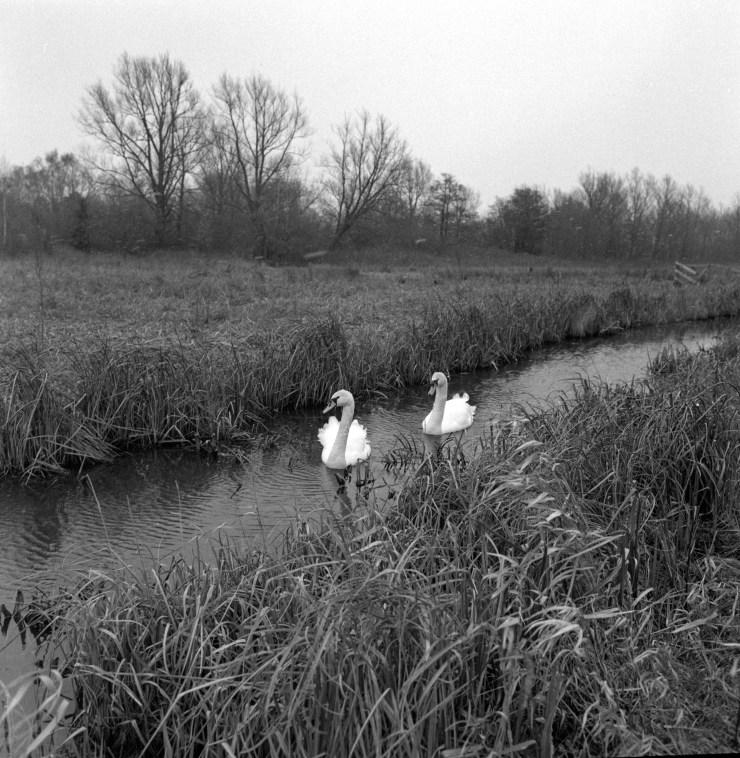 Norfolk Marshes-5