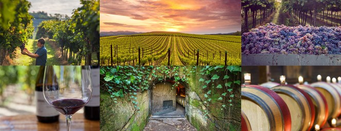 Image result for wine country