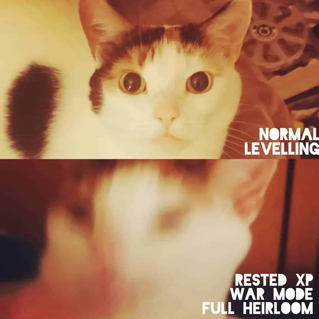 Pixel the cat levelling in  like... . . . . . . . .  ...