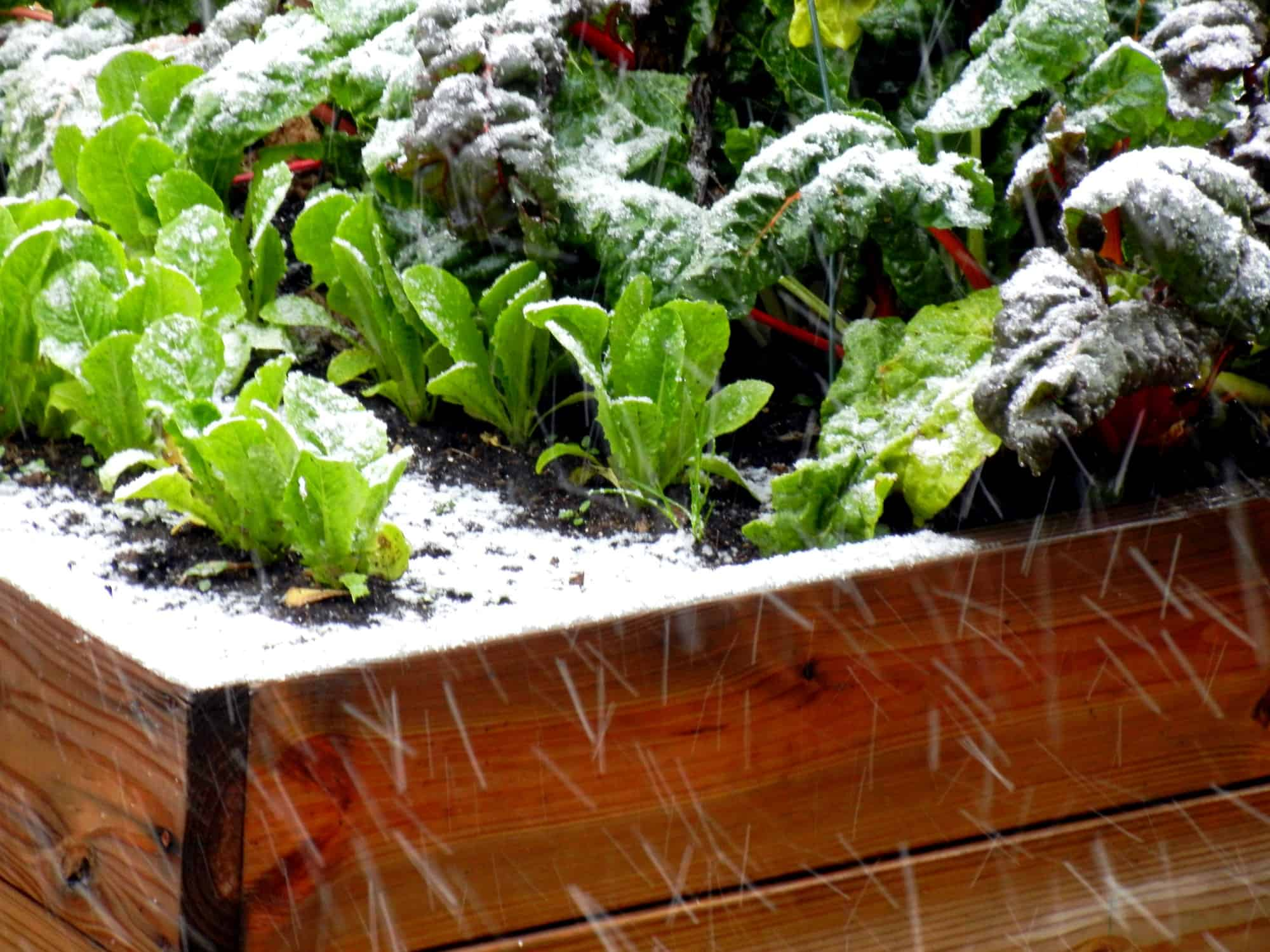 What to Grow in Your Vegetable Garden This November
