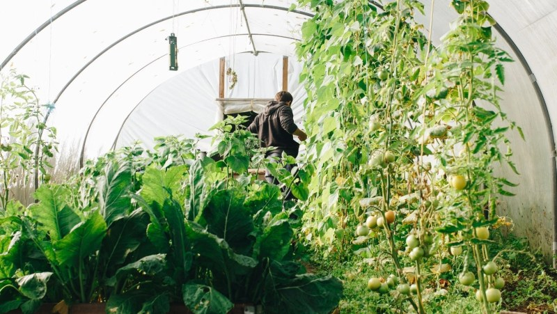 how to grow heirloom vegetables
