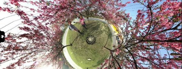 Cerejeiras de Mogi das Cruzes