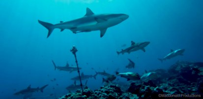 Sharks-around-the-holder-WIDE