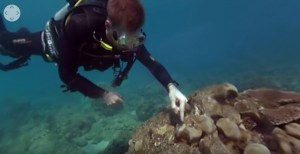 Treating coral disease
