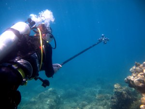 Buerger shooting coral disease video.