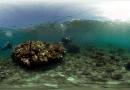 Virtual Reality coral cure video wins award
