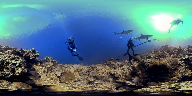 360Rize SeaDAK Sharks In Yap (800x400)