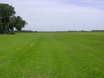 360sod - sod turf grass