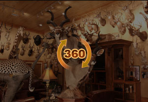 Trophy Room Design Services Top Taxidermy Company in USA African Lifesize mounts Design