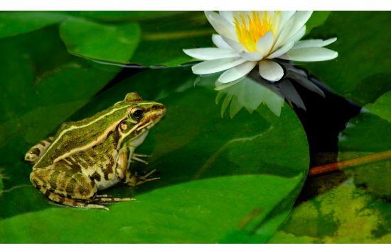 青蛙養殖方法