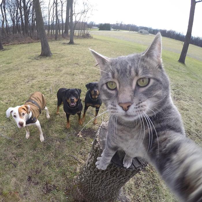 selfie chat 365 le Jeu