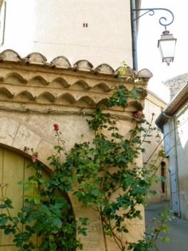 Camus' Rosen sind in diesem Jahr früh verblüht… ©Foto: akr