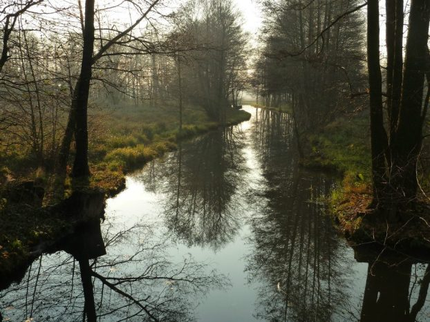 Landschaft aus Wald und Wasser – der Spreewald bei Lübben. ©Foto: Rauni Schulze