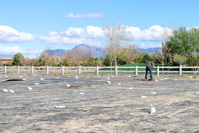 Working in the field at Steadfast Farm, Mesa, AZ.
