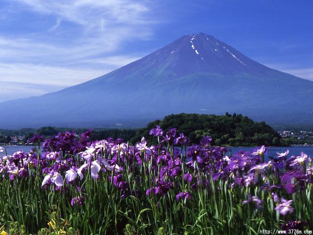 菖蒲と富士/河口湖