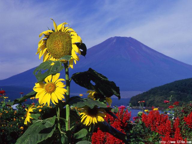晩夏の富士/山中湖