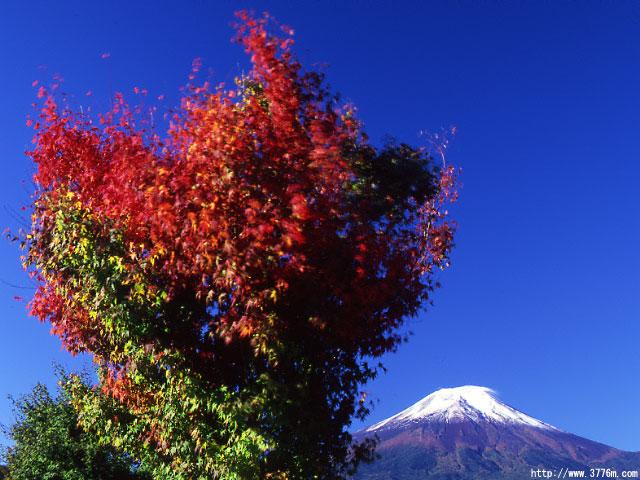 紅葉始まる富士/花の都公園