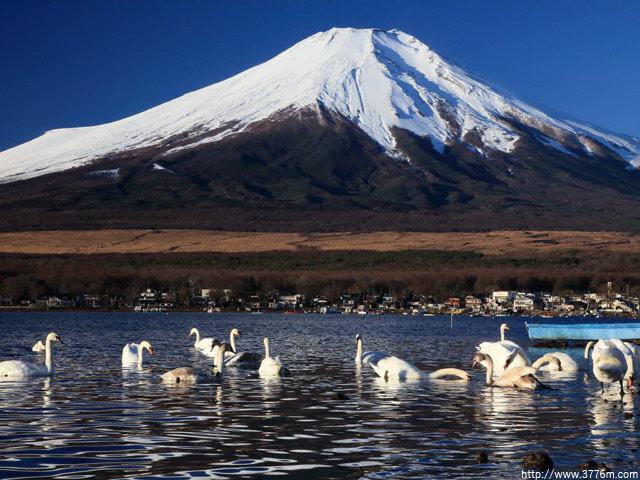 白鳥の湖/山中湖