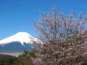 桜咲く二十曲峠