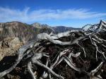 枯れ木と白馬三山