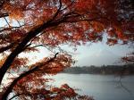 紅葉の河口湖