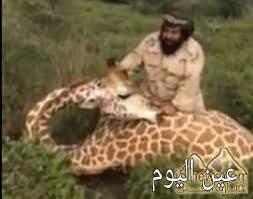"""بالفيديو.. سعودي بـ""""زي عسكري"""" يصطاد زرافة"""
