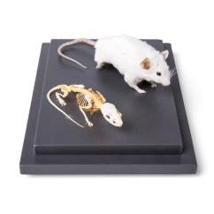 Mouse Skeletal Diagram 2016 Nissan Patrol Radio Wiring Skeleton And Stuffed 1002565 T31001