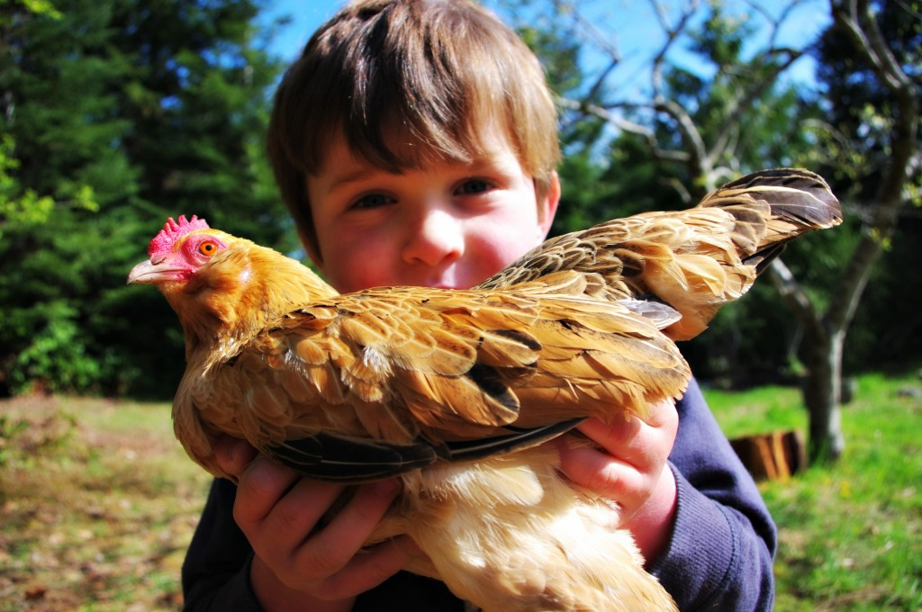 10 Things to Know Before You Get Chickens