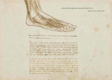 Leonardo Da Vinci foot study