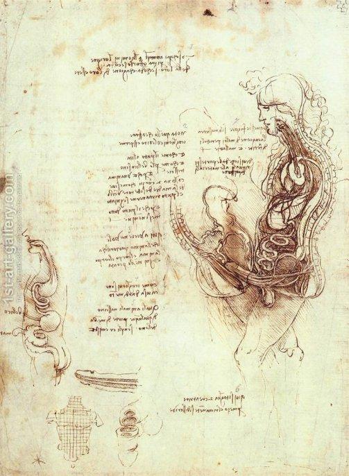 The anatomical study by Leonardo Da Vinci