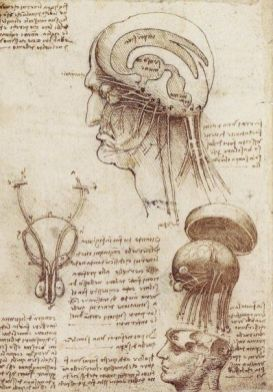 The anatomical study by Leonardo Da Vinci the Brain