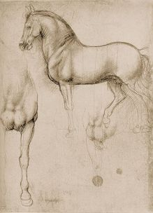 The anatomical study by Leonardo Da Vinci the Horse