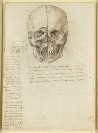 anatomical drawings by Leonardo Da Vinci