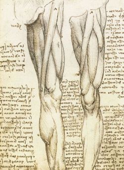 muscles anatomy made Leonardo Da Vinci
