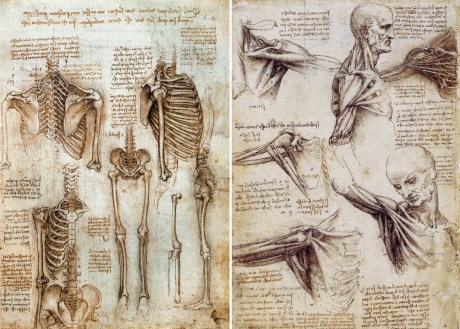 references-anatomy-of-human-body-leonardo-da-vinci