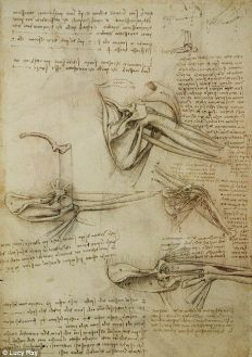 shoulder The anatomical study by Leonardo Da Vinci